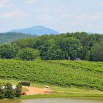 Comprender las regiones vinícolas