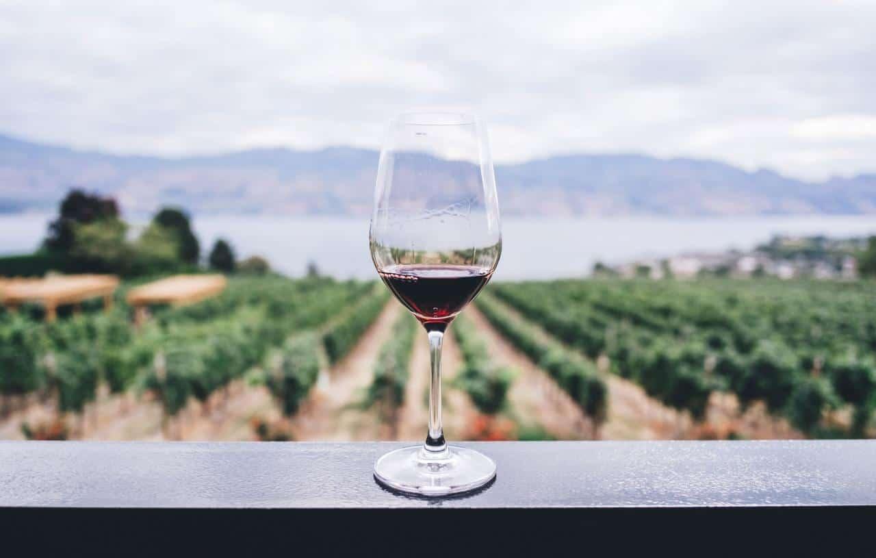 Los 10 mejores vinos de Sudáfrica